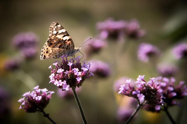 motýlek na kytce