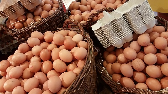 Vejce jako zdroj bílkovin